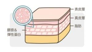 膠原蛋白_支撐皮膚-768x433