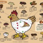 【我第一次這麼認識雞】「小棒棒腿」其實不是腿!常吃的「雞排」原來在這裡