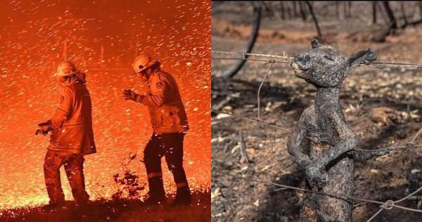澳洲大火已燒掉 1.5 個台灣、5 億隻動物葬火海!除了為祂們祈禱,你還有「5 方法」可救澳洲